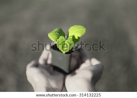 Human hands holding green small plant new life concept. copy-space