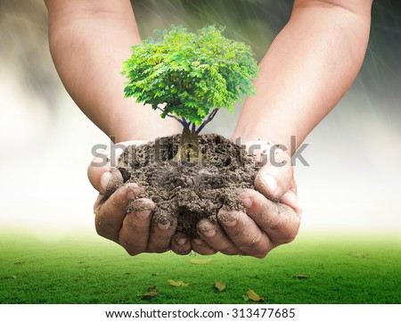 Human hands holding growing tree. Ecology World Environment Day Save Earth Hour Fruitful Food Health Care Light CSR Trust Forest Investment Eco Friendly Go Green Process Progress Love Hearth concept. - stock photo