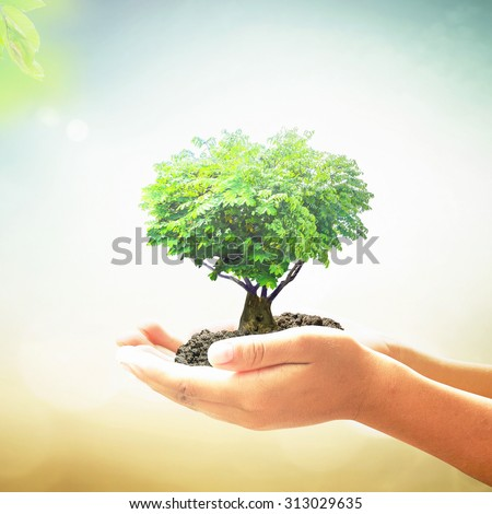 Human hands holding growing tree or plant in the shape heart with soil on blurred abstract beautiful ocean, green forest, over colorful sunset background. Ecology, World Environment Day concept. - stock photo