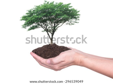 Human hands holding large trees growing in soil on white background. - stock photo