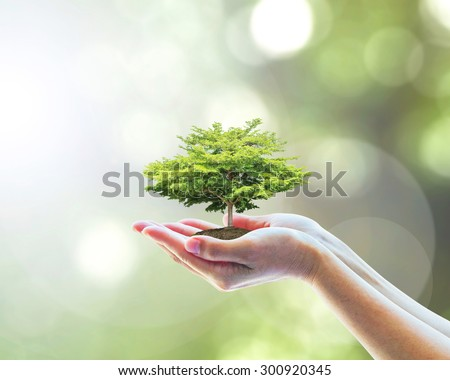 Human hands holding perfect growing tree plant on blurred natural bokeh background of tree leaves: Reforestation, sustainable forest, saving environment and harmony ecosystems conservation campaign   - stock photo