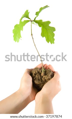 Human hands holding small oak - stock photo