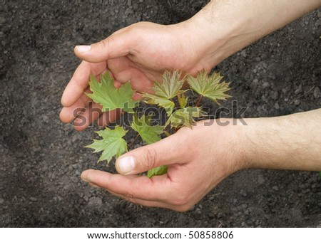 Human hands holding small plant growing from soil