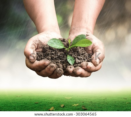 Human hands holding young plant over blurred rainy with nature background. Ecology concept. - stock photo