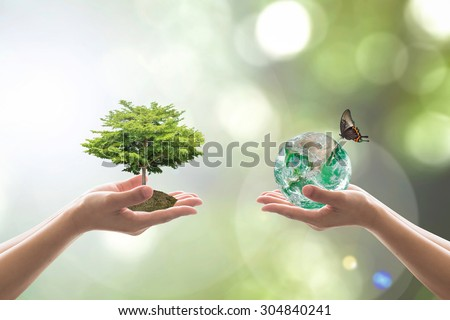 Human hands of two people holding/ saving perfect growing tree and green globe with butterfly on clean environment of blurred nature background bokeh: Elements of this image furnished by NASA - stock photo