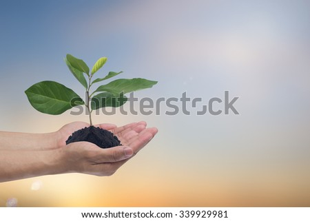 human hands palms up gesture holding growing plant over blur background:save/safe conservation environment conceptual:clean ecosystem:carbon credit business responsibility concept. - stock photo