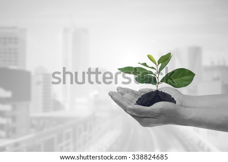 human hands palms up gesture holding growing plant over blur city space urban background:save/safe environment:clean ecosystem:carbon credit business responsibility concept.random act of kindness - stock photo
