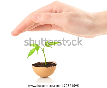 Human hands protecting young green plant in eggshell, isolated on white - stock photo