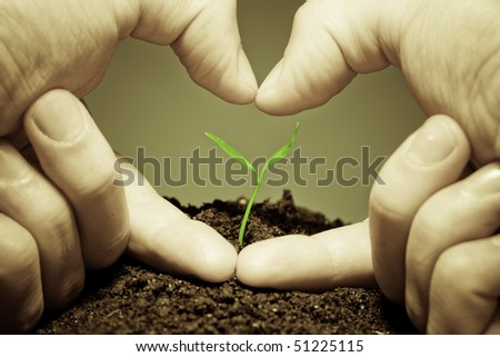 Human hands showing a heard symbol to the new green life. Conceptual environmental image. Focus on plant - stock photo