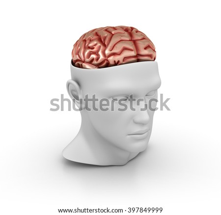 Human Head with Brain on White Background - High Quality 3D Render  - stock photo