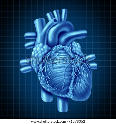 Human heart anatomy from a healthy body on a blue and black graph background as a medical health care symbol of an inner cardiovascular organ. - stock photo