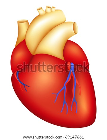 Human Heart, Bitmap copy - stock photo