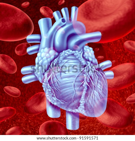 Human Heart Blood Flow anatomy with microscopic red blood cells flowing in an artery or vein as a human circulatory system medical health care symbol of an inner cardiovascular organ. - stock photo