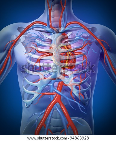 Human heart circulation In a skeleton cardiovascular system as an anatomy for a healthy body on a black glowing background as a medical health care symbol as a medical diagram. - stock photo