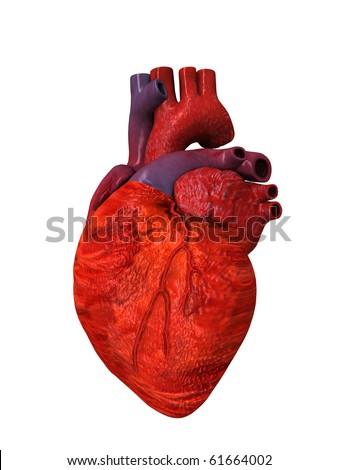 Human Heart 3D - stock photo