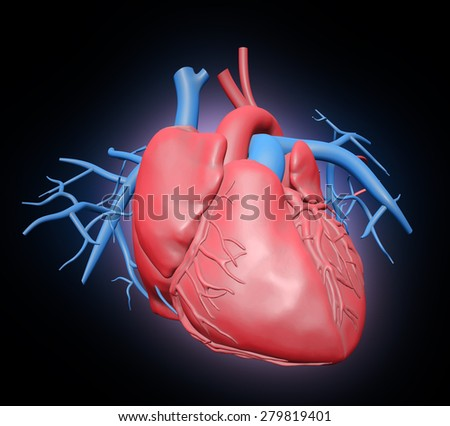Human heart illustration - cardiovascular system - stock photo