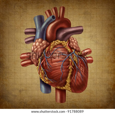 Human heart in as an old vintage grunge medical document texture in a vintage chart for blood circulation and inner organ function for health and medicine concept for cardiovascular diagnosis. - stock photo
