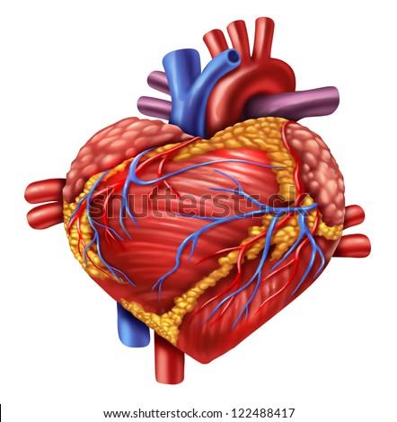 Human Heart Shape Love Symbol Using Stock Illustration 122488417