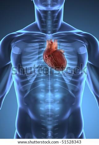 human heart inside human x-ray body isolated - stock photo