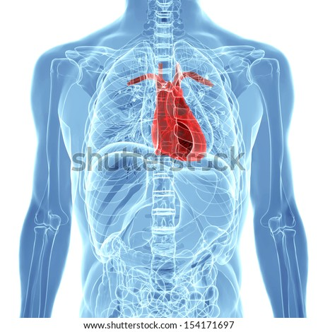 Inside Human Body Diagram Heart - Block And Schematic Diagrams •