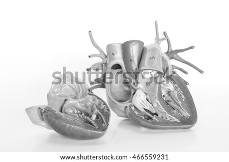 human heart model with black and white color concept