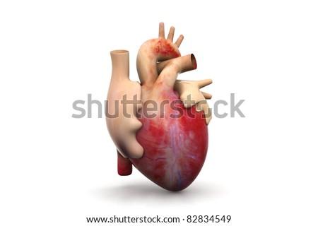 Human HEART textured - stock photo