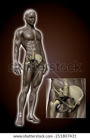 human hip - stock photo