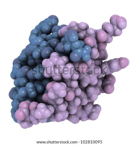 Human insulin molecule, chemical structure. Insulin is a peptide hormone used to treat type 1 diabetes. - stock photo