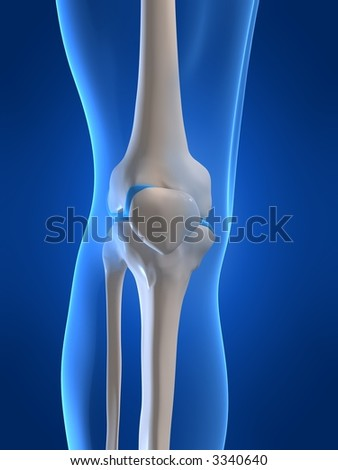 human knee - stock photo