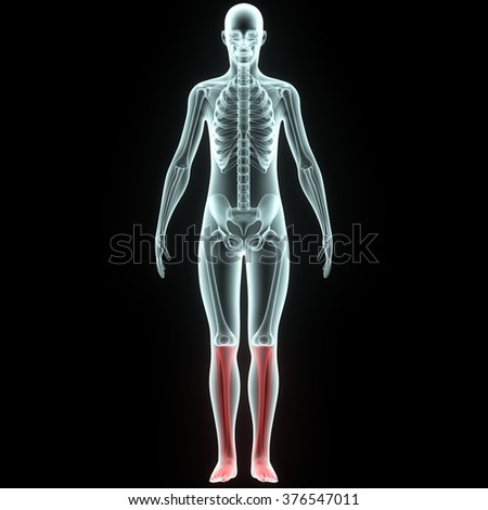 Human Knee Joints - stock photo