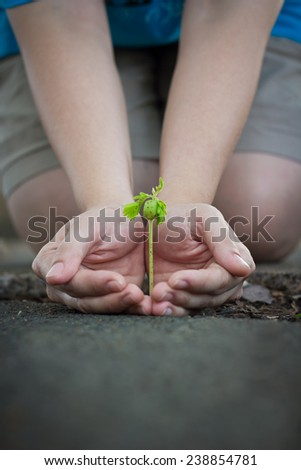 Human lady hands protect the tamarind sprout, seedling sprout up from the ground, green earth concept - stock photo