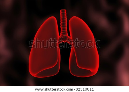 Human lungs.