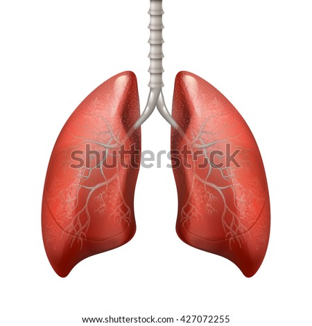 human lung stock images, royalty-free images & vectors | shutterstock, Cephalic Vein