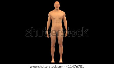 Human Male Muscle Body. 3D