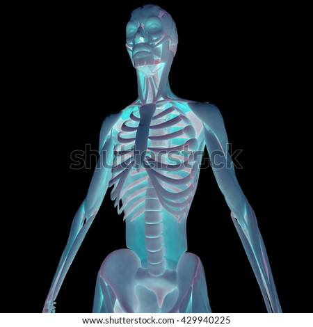 Human Muscle Body with Skeleton (Anatomy). 3D