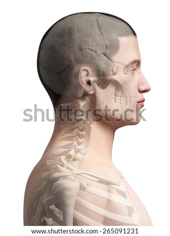 Human Neck Bones Illustration Stock Illustration 265091231 ...