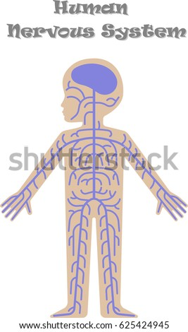 Human nervous system for kids - photo#25