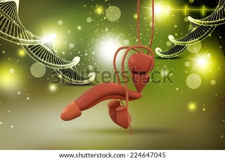 human penis anatomy - stock photo
