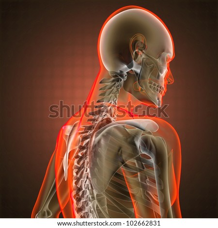 human radiography scan made in 3D - stock photo