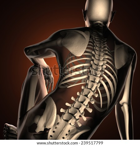 human radiography scan  with bones - stock photo