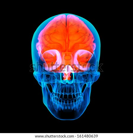 Human red brain X ray - front view - stock photo