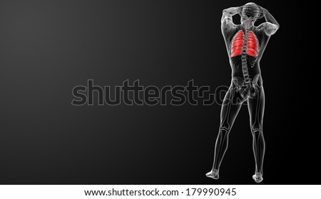 Human respiratory system in x-ray view - back view - stock photo