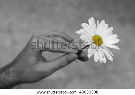 Humans Hand Holding White Flower