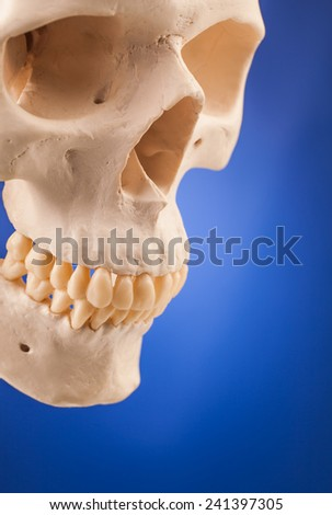 human scull and blue background - stock photo