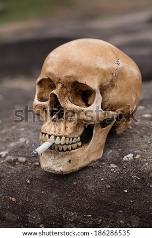 Human scull with cigarette in nature . Symbol of the dangers of smoking. - stock photo