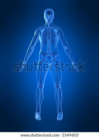 human skeleton - stock photo