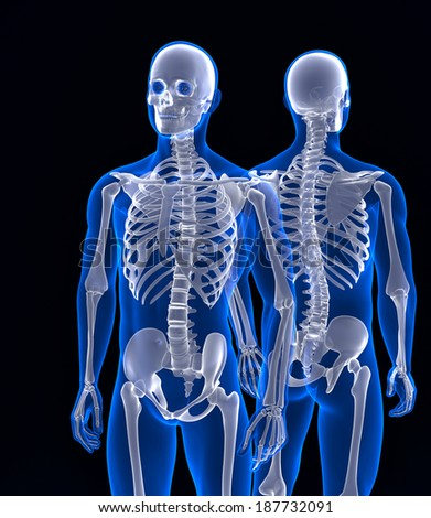 Human skeleton close up. Front and back view. Contains clipping path - stock photo
