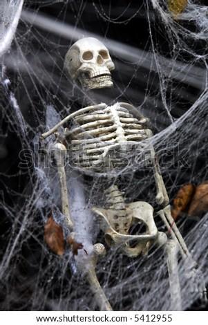 human skeleton coffin seen through thick stock photo 5412955, Skeleton