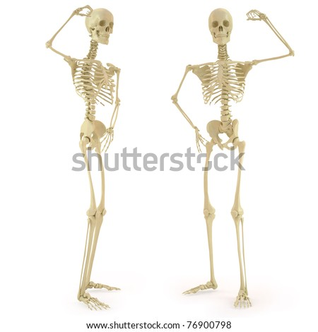human skeleton. isolated on white. - stock photo