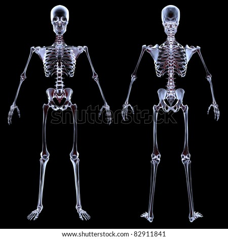human skeleton under the X-rays. isolated on black. - stock photo